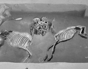 The fully excavated skeletons discovered by Swink. Almost certainly Regan and Goneril.